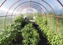 Trädgårds- växthus Fotografering för Bildbyråer