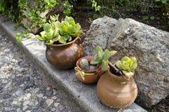 Trädgårds- vaser med växter med inga blommor i trädgården Arkivbild