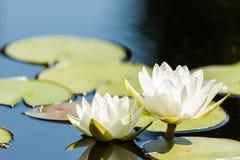 trädgårds- vatten Royaltyfri Foto