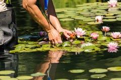 trädgårds- vatten Fotografering för Bildbyråer