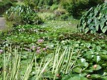 trädgårds- vatten Royaltyfri Fotografi