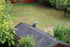 Trädgårds- vattenkastareklockor över trädgård från skjultaket arkivbild