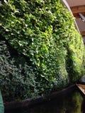 trädgårds- vertical Fotografering för Bildbyråer