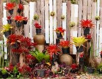 trädgårds- vertical Royaltyfri Foto