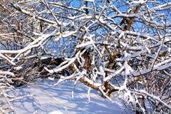 trädgårds- vinter Royaltyfria Foton