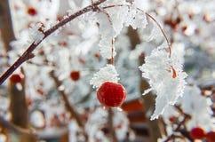 trädgårds- vinter Royaltyfri Fotografi