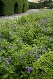 Trädgårds- Walkway Royaltyfri Bild