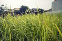 trädgårds- weeds Arkivfoton