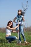 Trädgårdsmästarar som planterar den utomhus- treen Fotografering för Bildbyråer