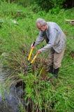 Trädgårdsmästare royaltyfri foto