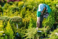 Trädgårdsmästare Buying New Plants royaltyfri fotografi