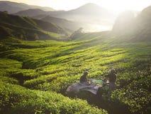 Trädgårdsmästare Concept för berg för kulle för skörd för teväxt Arkivbilder