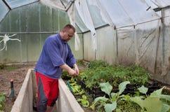 Trädgårdsmästare i ett växthus Arkivbild