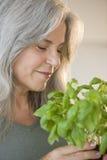 Trädgårdsmästare i ett växthus Royaltyfria Bilder