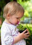 trädgårdsmästare little royaltyfri fotografi