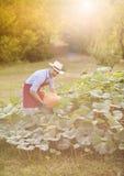 Trädgårdsmästare med pumpa Royaltyfria Bilder