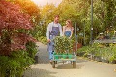 Trädgårdsmästare med vagnen Royaltyfri Foto