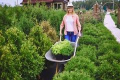 Trädgårdsmästare på arbete Fotografering för Bildbyråer