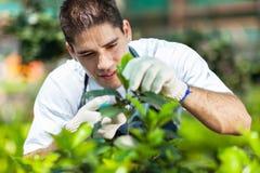 Trädgårdsmästare som fungerar i växthus royaltyfri foto