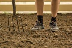 Trädgårdsmästare som gräver med gaffeln i trädgården Jord som förbereder sig för att plantera i vår Fokuserat selektivt royaltyfri foto