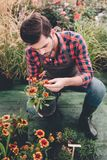 Trädgårdsmästare som kontrollerar blomman i blomkruka, medan arbeta i trädgård Fotografering för Bildbyråer