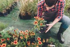 Trädgårdsmästare som kontrollerar blomman i blomkruka, medan arbeta i trädgård arkivfoton