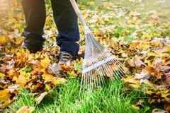 Trädgårdsmästare som krattar nedgångsidor i trädgård Arkivfoto