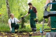 Trädgårdsmästare som planterar i parkera Royaltyfria Bilder