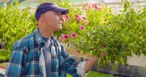 Trädgårdsmästare Writing In Clipboard, medan övervaka växter i växthus stock video
