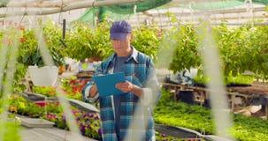 Trädgårdsmästare Writing In Clipboard, medan övervaka växter i växthus lager videofilmer