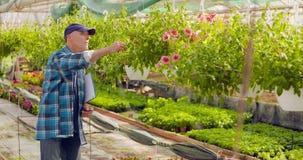 Trädgårdsmästare Writing In Clipboard, medan övervaka växter i växthus arkivfilmer