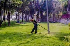 Trädgårdsmästareklippgräs Arkivfoton