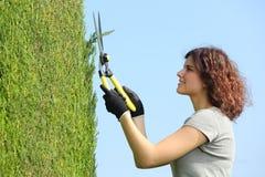 Trädgårdsmästarekvinna som beskär en cypress med att beskära sax Royaltyfri Foto