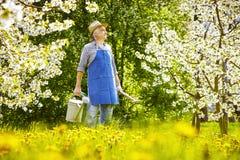 Trädgårdsmästaremaskrosängen som bevattnar kan Arkivbild