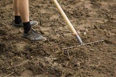 Trädgårdsmästaren arbetar med krattar i trädgården Jord som förbereder sig för att plantera i vår Arbeta i trädgården royaltyfri foto