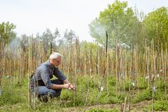 Trädgårdsmästaren behandlar unga växter Drivbänk av växter fotografering för bildbyråer