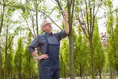 Trädgårdsmästaren håller ögonen på etiketten på ett träd i ett trädgårdlager arkivbild