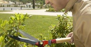Trädgårdsmästaren klippte en växt royaltyfri fotografi