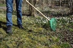 Trädgårdsmästaren med en gräsplan krattar på våren Royaltyfri Foto