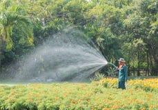 Trädgårdsmästaren som bevattnar blomman Royaltyfri Bild