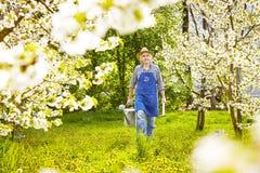 Trädgårdsmästaren som bevattnar kan det körsbärsröda trädet för spaden Arkivfoto
