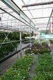 trädgårdsnäring Royaltyfria Foton
