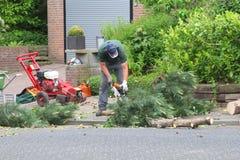 Trädgårdsodlaren sågar stammar av ett träd med en chainsaw Royaltyfria Bilder