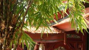 Trädgårdträd nära orientalisk tempelbyggnad Exotiskt bambuträd som växer nära traditionell dekorativ byggnad på solig dag lager videofilmer