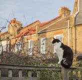 Trädgårdträdgård, London, England, UK - en vit och svart katt som bort ser arkivbilder