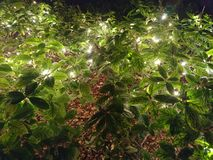 Trädgårduteplatsljus i buskar som tänder en gata arkivfoton
