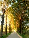 Trädgränd Arkivbild