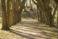 Trädgränd Royaltyfria Bilder