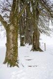 Trädgränd i vintern som täckas med insnöade Holzkirchen, Bayern, Tyskland royaltyfria bilder