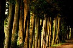 Trädgrändväg längs den jordnära vägen Royaltyfria Bilder